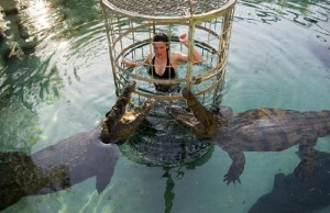 croc-cage-dive-experience